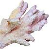 МАГИЯ  КАМНЕЙ - Страница 5 Korall