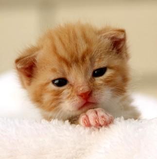 Фото Больные кошки во сне к чему снятся